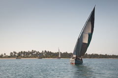 Dhaws à la côte de Barra près de Tofo Photographie stock
