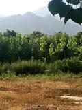Dheri di Mala, alberi verdi e montagne fotografie stock libere da diritti