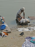 Dhobiwallah washes clothes in the Ganges River Stock Photography