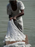 Dhobiwallah washes clothes in the Ganges River Royalty Free Stock Image
