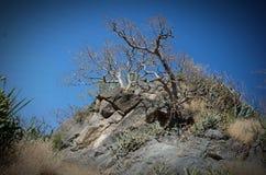 Dhodap-Fort-Wanderung Lizenzfreies Stockfoto