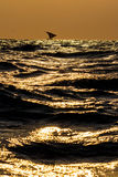 Dhow auf goldenem Meer Stockbilder