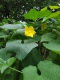 Dhumbqboom met bloem Groene boom royalty-vrije stock afbeeldingen