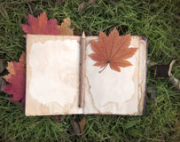 Diário e folhas de bordo na grama verde Imagens de Stock