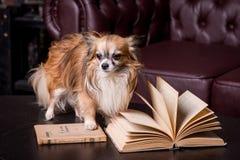 Diário, livro, cão pequeno foto de stock