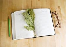 Diário, vidros e um ramo das folhas secas do carvalho Imagens de Stock
