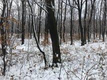 ‰ Di à gervölgy nell'inverno vicino al ` del gertetÅ del ‰ di à fotografie stock