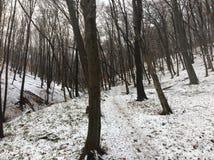 ‰ Di à gervölgy nell'inverno vicino al ` del gertetÅ del ‰ di à fotografie stock libere da diritti