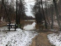 ‰ Di à gervölgy nell'inverno vicino al ` del gertetÅ del ‰ di à fotografia stock libera da diritti