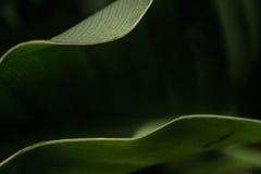 Di arti verde fotografie stock