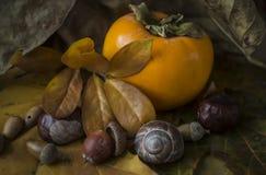 Di autunno lifes ancora con il cachi Fotografie Stock