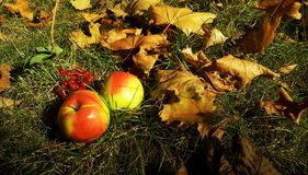 Di autunno vita ancora fotografia stock