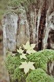 Di autunno vita ancora Immagini Stock
