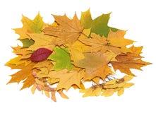 Di autunno vita ancora con i fogli Fotografie Stock