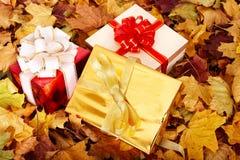 Di autunno vita ancora con il contenitore di regalo del gruppo. Immagine Stock Libera da Diritti