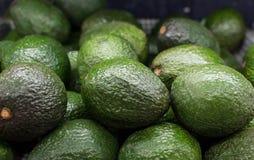 Di avocado Fotografia Stock Libera da Diritti