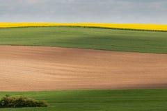 Di campi verdi, marroni e colorati di gialla come strati Fotografia Stock Libera da Diritti