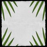 Di carta invecchiato con le foglii di palma verdi Fotografie Stock Libere da Diritti
