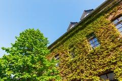 di casa rivestita di vite in Bedburg alt-Kaster, Germania Fotografia Stock