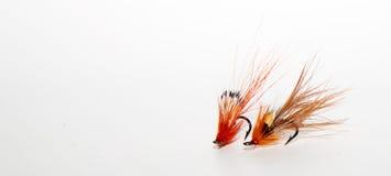 Di color salmone vola Immagini Stock Libere da Diritti
