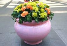 di fiori colorati Multi in un grande vaso Fotografia Stock