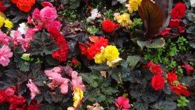 ‹Di FlowerÑ Fotografie Stock Libere da Diritti