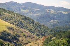 di foreste colorate Multi nelle montagne della Serbia Immagini Stock