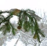 Di fronte alla finestra, un ramo è benissimo, decorato per il nuovo anno di Natale immagine stock libera da diritti