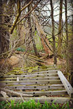 Di funzionamento vecchio ponte boscoso giù sull'azienda agricola Fotografia Stock
