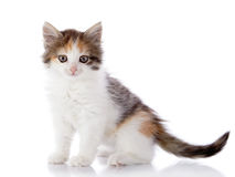 di gattino colorato Multi fotografia stock libera da diritti