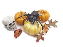 Di Halloween vita ancora con il ragno ed il cranio immagini stock libere da diritti