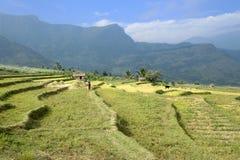 Di Kanthallur valle giù e coltivazione a terrazze Immagini Stock Libere da Diritti
