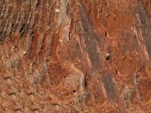 Di legno Fotografia Stock