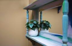 Di legno accantoni con la decorazione della pianta verde sulla parete Fotografia Stock