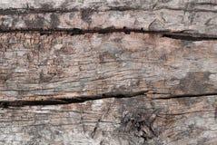 di legno asciughi la corteccia Immagini Stock Libere da Diritti