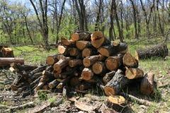 Di legno collega il prato della molla Fotografie Stock