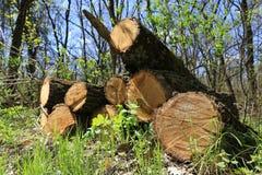 Di legno collega il prato verde in foresta Fotografia Stock