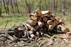Di legno collega il prato verde in foresta Fotografia Stock Libera da Diritti