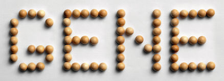 ` Di legno del gene del ` di arte di parola della puntina Fotografie Stock