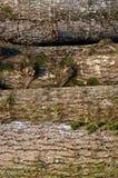 Di legno di legname all'aperto Fotografia Stock Libera da Diritti