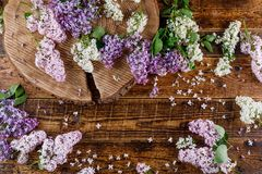 Di legno dormito nel giacimento detritico circostante dei fiori lilla delle tonalità differenti fotografie stock libere da diritti