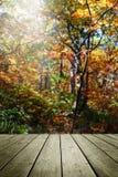 Di legno svuoti ed offuschi il fondo di autunno immagini stock libere da diritti