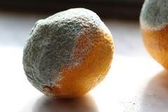 di mandarini coperti di muffa che gettano le ombre Fotografie Stock