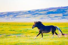 Di mattina, un cavallo è sul pascolo Fotografia Stock