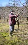 Di melo della potatura dell'agricoltore Immagini Stock