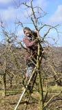 Di melo della potatura dell'agricoltore Fotografie Stock