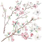 Di melo disegnato a mano si ramifica e fiori, albero di fioritura illustrazione di stock