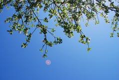 Di melo e disco volante Fotografia Stock