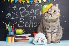 Di nuovo a scuola, ad un gatto in un cappuccio e con uno zaino sui precedenti degli accessori della scuola e della lavagna, il co immagini stock libere da diritti