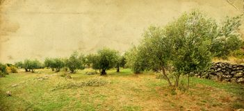 Di olivo Fotografia Stock